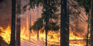 Incendio in foresta