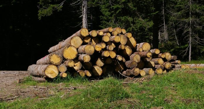 Tronchi provenienti dal bosco e pronti per il commercio di legna