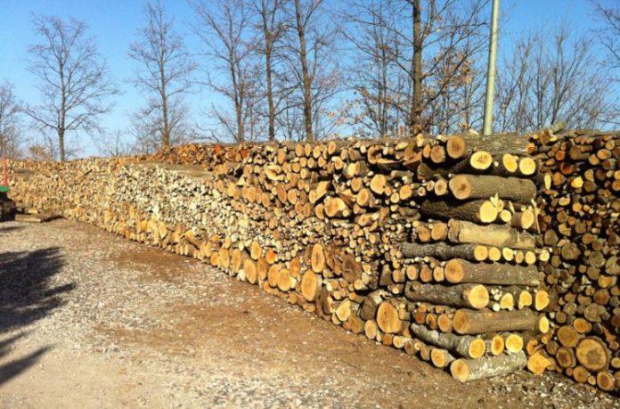 Nuovo Codice Forestale: