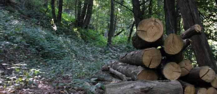 Approvato il Nuovo Codice Forestale