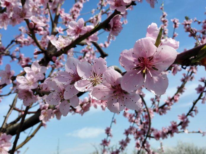 Primavera, l'equinozio anticiperà di un giorno per i prossimi 84 anni