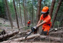 Taglio del legname, @Eco della Lunigiana