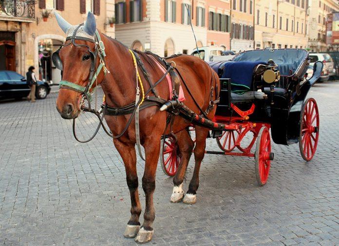 Botticelle a Roma, tra le macchine e il traffico