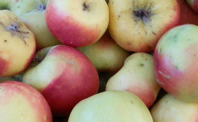 Da una mela risorse per l'industria alimentare: nuova scoperta di Università di Bolzano
