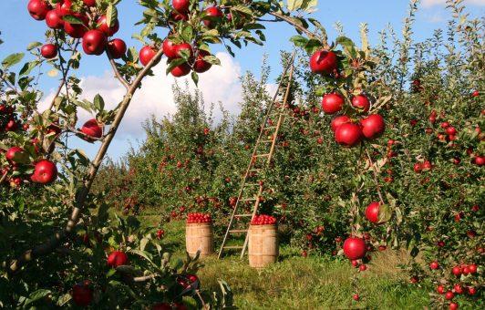 Frutteto della biodiversità