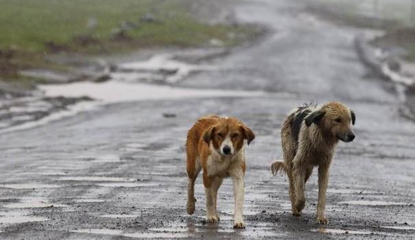 Cani randagi di Kiev