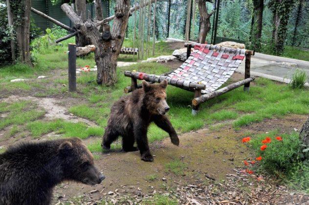Gli orsi albanesi salvati, ora al Bioparco