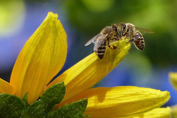 """Tutela delle api, sottoscritta la prima """"Carta di tutela"""" dalla comunità scientifica"""