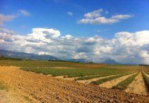 Agricoltura intensiva