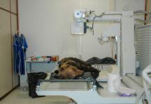 Orso deceduto nel Parco Nazionale d'Abruzzo Lazio e Molise
