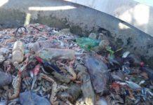 Plastica pescata insieme al pesce, @Latinaoggi