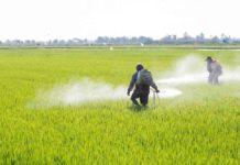 Un campo trattato con pesticidi