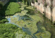 Un esempio di eutrofizzazione nel canale di via Ripamonti a MIlano