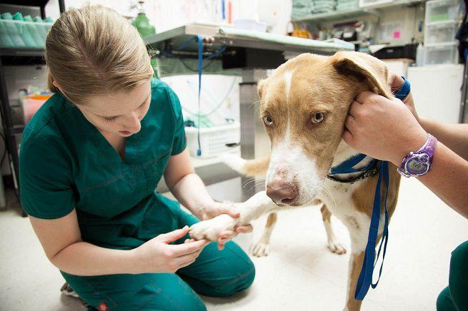 Tra gli emendamenti, anche quello sulla riduzione iva per le spese veterinarie
