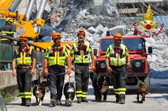 Tra le macerie di Genova, le unità cinofile dei Vigili del Fuoco umbri