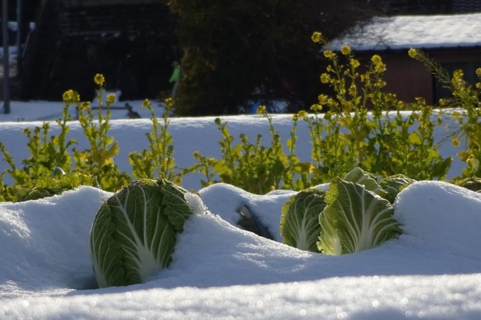 verdure e ortaggi