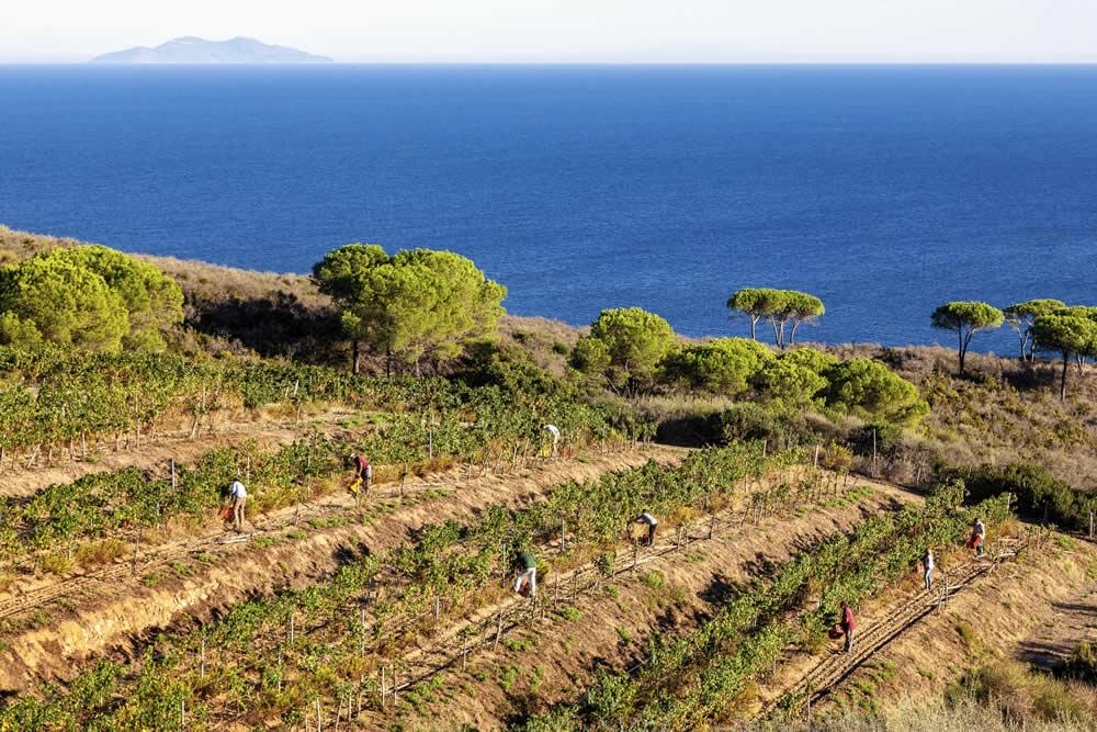 All'Elba la prima DOC della storia: la istituì Napoleone per i vini dell'Isola