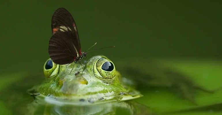 """Dossier """"Biodiversità a rischio"""", farfalle in declino continuo dal 2000"""