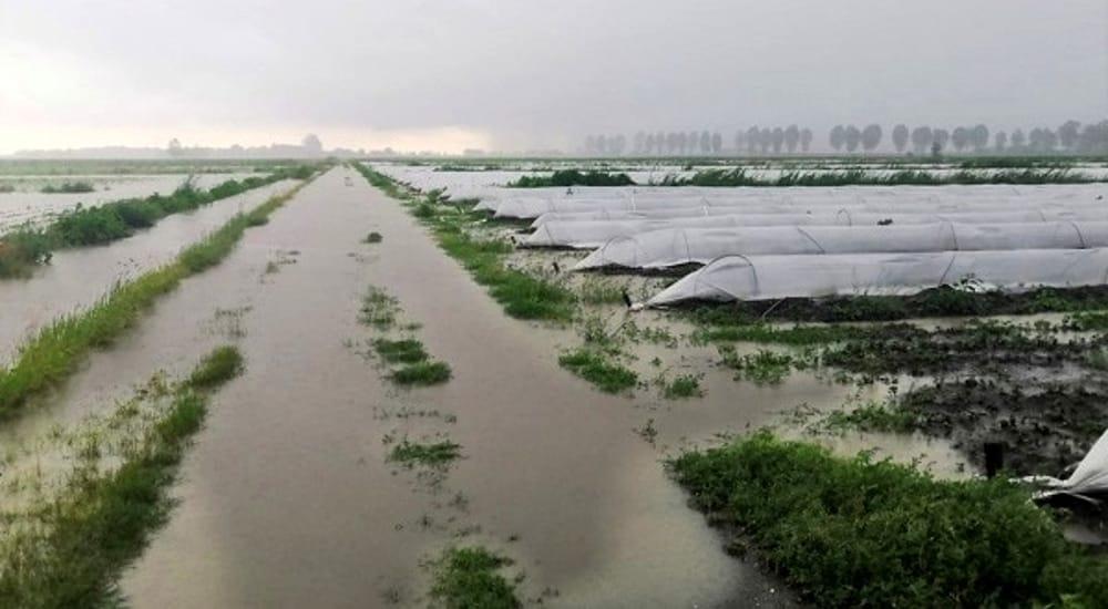 Maltempo in agricoltura