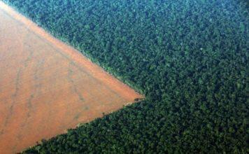 Un terreno confinante con la foresta amazzonica, preparato per la coltivazione di soia