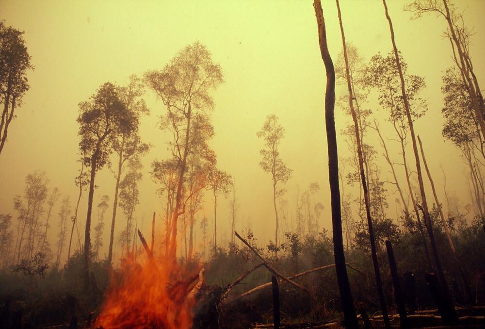Amazzonia, Congo, Indonesia, Australia: l'annus horribilis delle foreste a fuoco