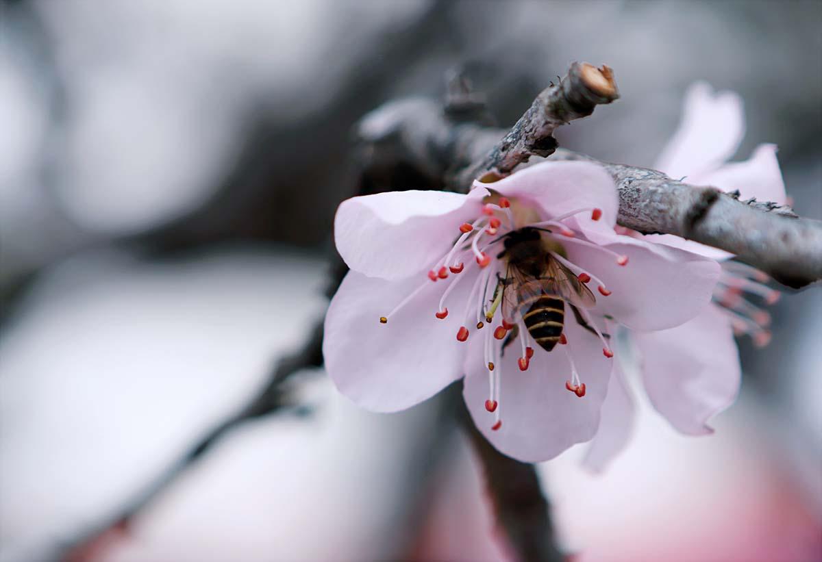 Milano, in primavera sarà conclusa l'autostrada per le api: 3.5 chilometri di via fiorita in città