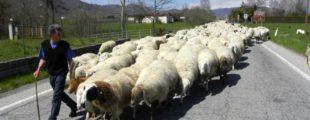 """Giornata della Pastorizia, Coldiretti: """"L'agnello a Pasqua salva il made in Italy e 60mila pastori"""""""