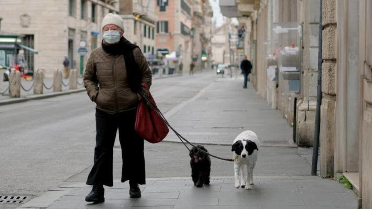 Domande Al Veterinario Cane animali domestici al tempo del coronavirus, tutte le